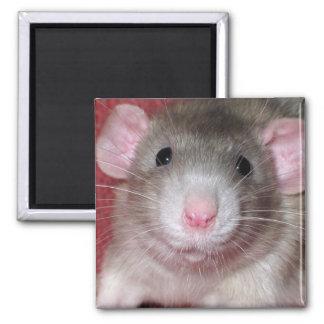 Cute Dumbo Rat Square Magnet