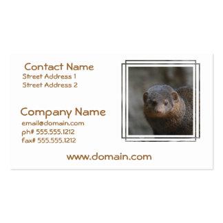 Cute Dwarf Mongoose Business Cards