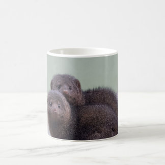 Cute Dwarf Mongoose Pair Coffee Mug
