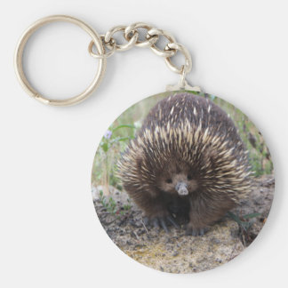 Cute Echidna from Australia Key Ring