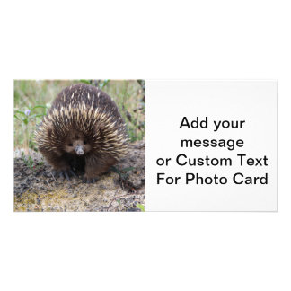 Cute Echidna from Australia Personalized Photo Card