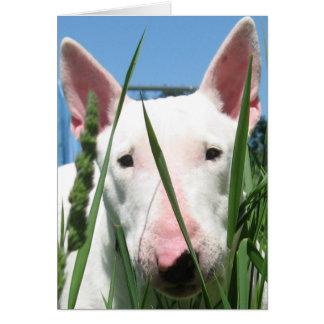 Cute English Bull Terrier Greeting Card