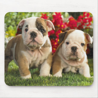 Cute English Bulldog Puppy Dogs Mousepad