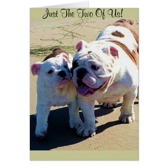 Cute English Bulldogs Just The Two Of Us!
