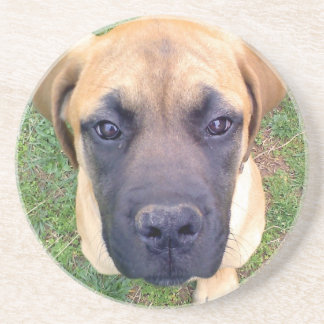 Cute English Mastiff Puppy close-up photo Coaster
