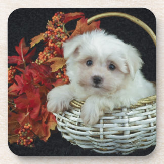 Cute Fall Puppy Coasters