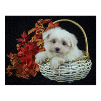 Cute Fall Puppy Postcard