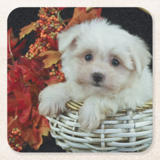 Cute Fall Puppy Square Paper Coaster