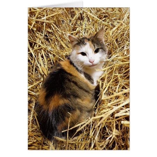 Cute Farm Cat Greetings Card