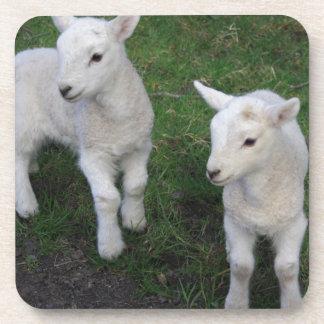 Cute Farm Ranch Baby Twins Sheep Lamb Drink Coaster