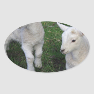 Cute Farm Ranch Baby Twins Sheep Lamb Oval Sticker