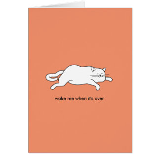cute fat cat on a card