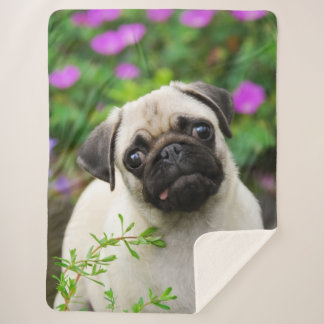 Cute Fawn Colored Pug Puppy Dog Face Pet Photo on Sherpa Blanket