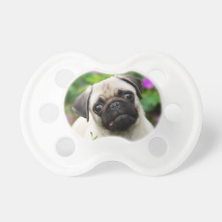 Cute Fawn Colored Pug Puppy Dog Face Pet Photo -. Pacifier