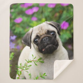 """Cute Fawn Colored Pug Puppy Dog Face Pet Photo """""""" Sherpa Blanket"""