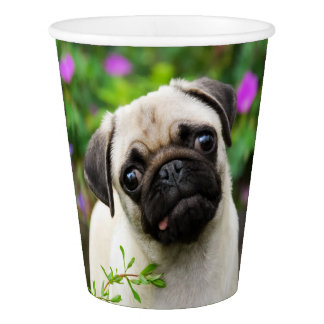 Cute Fawn Colored Pug Puppy Dog Portrait, Party