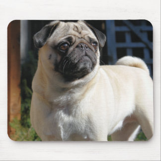 Cute Fawn Pug Mousepad