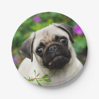 Cute Fawn Pug Puppy Dog Portrait, Happy Party 7 Inch Paper Plate