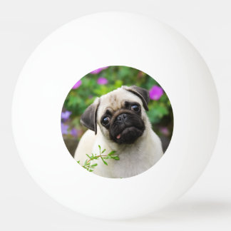 Cute fawn pug puppy ping pong ball