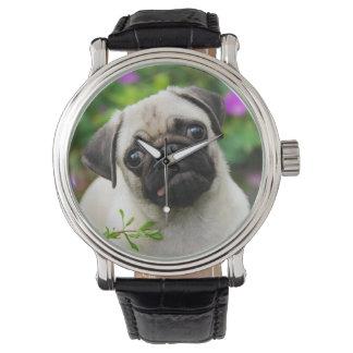 Cute fawn pug puppy watch