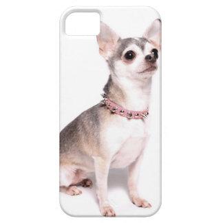 Cute female chihuahua iPhone 5 case