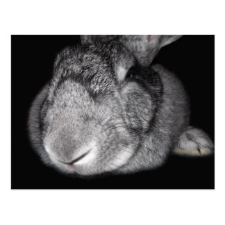 Cute Flemish Giant Some Bunny Loves You! Postcard