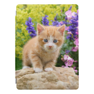 Cute Fluffy Ginger Baby Cat Kitten in Flowers // iPad Pro Cover
