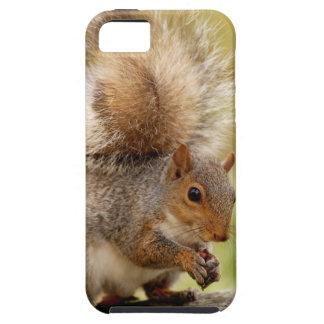 Cute Fluffy Squirrel iPhone 5 Case