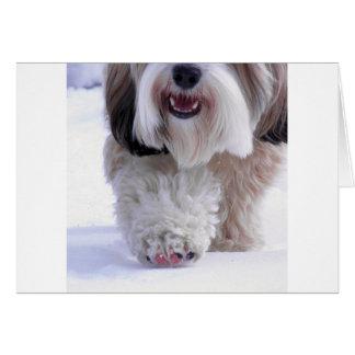 Cute Fluffy Tibetan Terrier Snow Paw Greeting Card