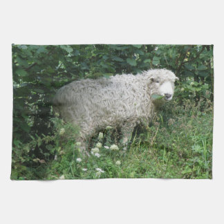 Cute Fluffy White Sheep Eating Kitchen Towel