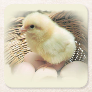 Cute Fluffy Yellow Baby Chicken in Basket Square Paper Coaster