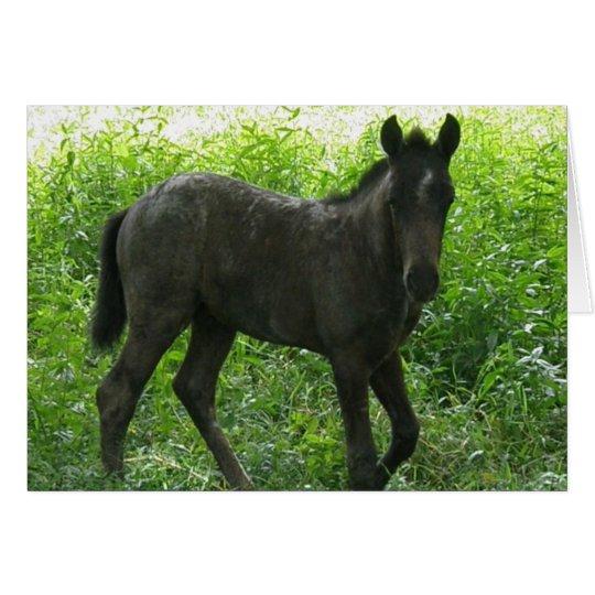 Cute Foal Greeting Cards