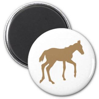 Cute foal horse fridge magnets