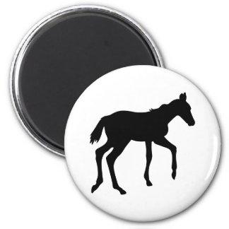 Cute foal horse refrigerator magnet