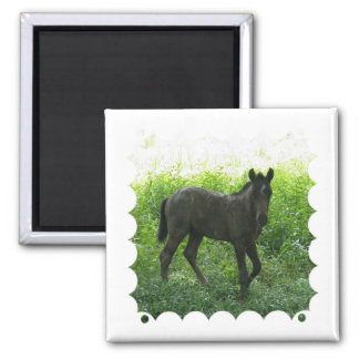 Cute Foal Magnet Refrigerator Magnets