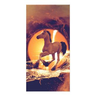 Cute foal photo card