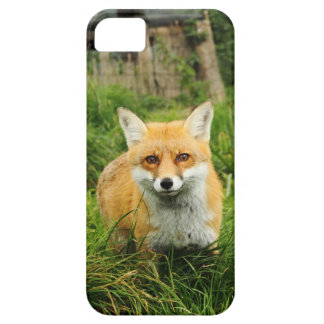 Cute Fox iPhone 5 Barely There Universal Case