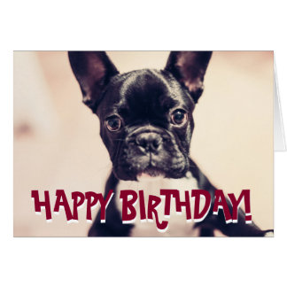 Cute French Bulldog birthday card