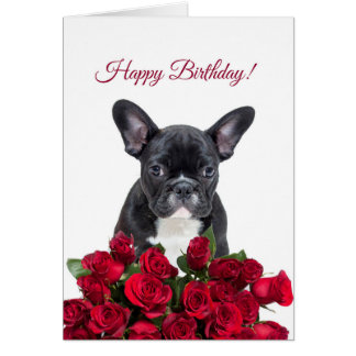 Cute French Bulldog Happy Birthday Red Roses Card