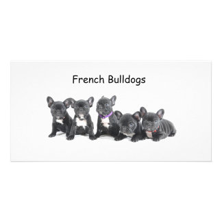 Cute French Bulldog Puppies Card