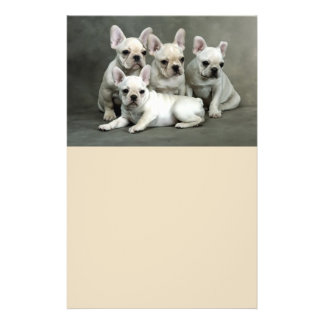 Cute French Bulldog Puppies Flyer