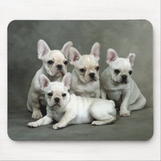 Cute French Bulldog Puppies Mouse Pad