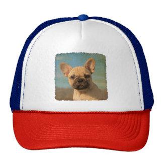 Cute French Bulldog Puppy Vintage Photo - cap