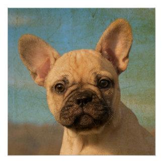 Cute French Bulldog puppy, vintage