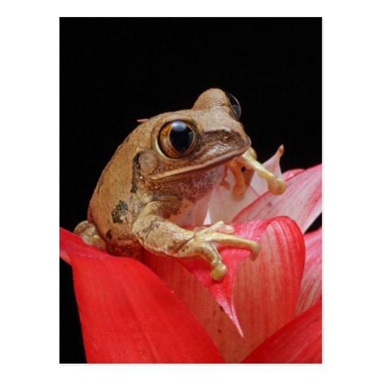 Cute Frog In Red Flower Postcard