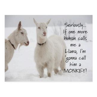 Cute Funny Animal Goat Joke Postcard