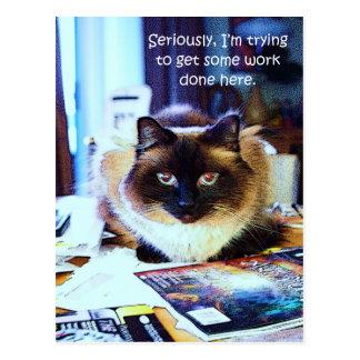 Cute Funny Animal Kitty Cat Joke Postcard