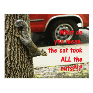 Cute Funny Animal Squirrel Joke Postcard