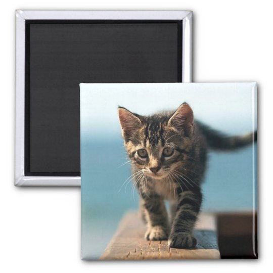 cute_funny_animals_23 KITTEN CAT ADORABLE BABY Square Magnet