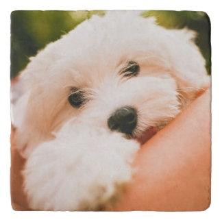 Cute & Funny Dog trivet 3
